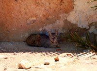 There's that cat - there are lots all over Tunisia - most of them malnourished!